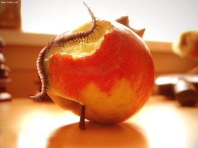 عکس های بسیار زیبا از میوه ها_Www.Pix98.CoM